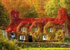 Το Φθινόπωρο στον πλανήτη - Οι μεταμορφώσεις της φύσης από την Ουαλία μέχρι την Ιαπωνία (ΦΩΤΟ) - Κυρίως Φωτογραφία - Gallery - Video 9