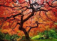 Το Φθινόπωρο στον πλανήτη - Οι μεταμορφώσεις της φύσης από την Ουαλία μέχρι την Ιαπωνία (ΦΩΤΟ) - Κυρίως Φωτογραφία - Gallery - Video 7