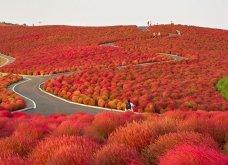 Το Φθινόπωρο στον πλανήτη - Οι μεταμορφώσεις της φύσης από την Ουαλία μέχρι την Ιαπωνία (ΦΩΤΟ) - Κυρίως Φωτογραφία - Gallery - Video 4