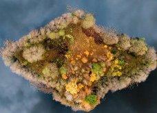 Το Φθινόπωρο στον πλανήτη - Οι μεταμορφώσεις της φύσης από την Ουαλία μέχρι την Ιαπωνία (ΦΩΤΟ) - Κυρίως Φωτογραφία - Gallery - Video 2
