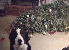 Θα τα λατρέψετε κι ας καταστρέφουν το χριστουγεννιάτικο δέντρο- Δείτε 30  υπέροχες φωτογραφίες των τετράποδων φίλων μας που τα ...βάζουν με το δέντρο  - Κυρίως Φωτογραφία - Gallery - Video