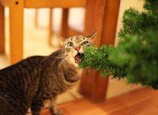 Smile: Πως να τα μαλώσεις; 14 σκυλάκια & γατάκια που τα έκαναν μαντάρα τα Χριστουγεννιάτικα δέντρα! (slideshow) - Κυρίως Φωτογραφία - Gallery - Video 10