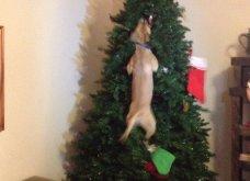 Smile: Πως να τα μαλώσεις; 14 σκυλάκια & γατάκια που τα έκαναν μαντάρα τα Χριστουγεννιάτικα δέντρα! (slideshow) - Κυρίως Φωτογραφία - Gallery - Video 12