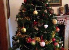 Smile: Πως να τα μαλώσεις; 14 σκυλάκια & γατάκια που τα έκαναν μαντάρα τα Χριστουγεννιάτικα δέντρα! (slideshow) - Κυρίως Φωτογραφία - Gallery - Video 3