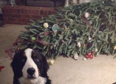 Smile: Πως να τα μαλώσεις; 14 σκυλάκια & γατάκια που τα έκαναν μαντάρα τα Χριστουγεννιάτικα δέντρα! (slideshow) - Κυρίως Φωτογραφία - Gallery - Video 4