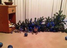 Smile: Πως να τα μαλώσεις; 14 σκυλάκια & γατάκια που τα έκαναν μαντάρα τα Χριστουγεννιάτικα δέντρα! (slideshow) - Κυρίως Φωτογραφία - Gallery - Video 5