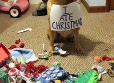 Smile: Πως να τα μαλώσεις; 14 σκυλάκια & γατάκια που τα έκαναν μαντάρα τα Χριστουγεννιάτικα δέντρα! (slideshow) - Κυρίως Φωτογραφία - Gallery - Video 6