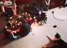 Smile: Πως να τα μαλώσεις; 14 σκυλάκια & γατάκια που τα έκαναν μαντάρα τα Χριστουγεννιάτικα δέντρα! (slideshow) - Κυρίως Φωτογραφία - Gallery - Video 7
