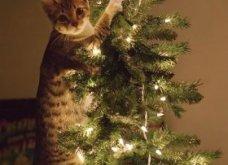 Smile: Πως να τα μαλώσεις; 14 σκυλάκια & γατάκια που τα έκαναν μαντάρα τα Χριστουγεννιάτικα δέντρα! (slideshow) - Κυρίως Φωτογραφία - Gallery - Video 9