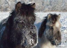 """Ήρθε η """"εποχή των παγετώνων""""; Εκπληκτικές φωτογραφίες από το πιο παγωμένο χωριό της Σιβηρίας - Η ζωή στους -62 ! (ΦΩΤΟ) - Κυρίως Φωτογραφία - Gallery - Video 11"""