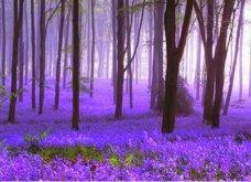 Μαγευτικά χρώματα από το πιο παραμυθένιο δάσος στο Βέλγιο! Όταν τα λόγια μοιάζουν φτωχά μπρος τη μαγεία της φύσης... (ΦΩΤΟ) - Κυρίως Φωτογραφία - Gallery - Video