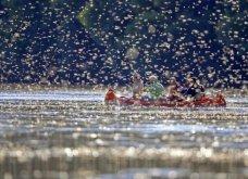 Θέαμα - μαγεία από την Ουγγαρία! Ο ποταμός Tisza που μοιάζει σαν ανθισμένο λιβάδι από πεταλούδες (ΦΩΤΟ) - Κυρίως Φωτογραφία - Gallery - Video