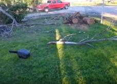 Πήγαν να κόψουν δέντρα & έφεραν την καταστροφή: Να τι μπορεί να συμβεί σε λίγα δευτερόλεπτα (ΒΙΝΤΕΟ) - Κυρίως Φωτογραφία - Gallery - Video