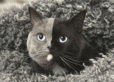 Νάρνια, η γάτα που γεννήθηκε με δύο πρόσωπα και μεγαλώνοντας έγινε πανέμορφη! (ΦΩΤΟ - ΒΙΝΤΕΟ) - Κυρίως Φωτογραφία - Gallery - Video
