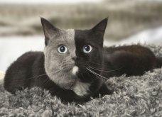 Νάρνια, η γάτα που γεννήθηκε με δύο πρόσωπα και μεγαλώνοντας έγινε πανέμορφη! (ΦΩΤΟ - ΒΙΝΤΕΟ) - Κυρίως Φωτογραφία - Gallery - Video 3
