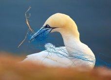 Bird Photographer of the Year 2018: Φαντασμαγορικές λήψεις πτηνών: Κύκνοι, αετός, κουκουβάγια του χιονιού - Κυρίως Φωτογραφία - Gallery - Video 2