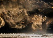 Bird Photographer of the Year 2018: Φαντασμαγορικές λήψεις πτηνών: Κύκνοι, αετός, κουκουβάγια του χιονιού - Κυρίως Φωτογραφία - Gallery - Video 3