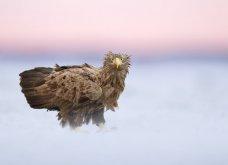 Bird Photographer of the Year 2018: Φαντασμαγορικές λήψεις πτηνών: Κύκνοι, αετός, κουκουβάγια του χιονιού - Κυρίως Φωτογραφία - Gallery - Video 7