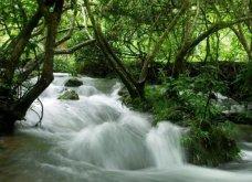 Maolan Karst Forest: Ένα από τα ομορφότερα δάση στην Κίνα- Τοπία που κόβουν την ανάσα (ΦΩΤΟ) - Κυρίως Φωτογραφία - Gallery - Video