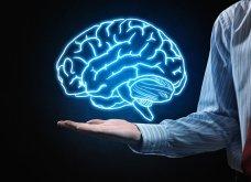 Απίστευτο! Επιστήμονες διατήρησαν ζωντανούς επί 36 ώρες τους εγκεφάλους χωρίς σώμα - Συμβαίνει για πρώτη φορά!  - Κυρίως Φωτογραφία - Gallery - Video