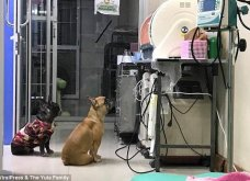 Μάνα είναι μόνο μία: Η σκύλα με χτυποκάρδι μπροστά στα πρόωρα μωρά της στην θερμοκοιτίδα (ΦΩΤΟ-ΒΙΝΤΕΟ) - Κυρίως Φωτογραφία - Gallery - Video