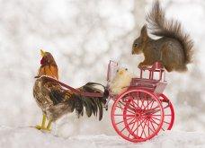 Γλυκά σκιουράκια ετοιμάζονται να γιορτάσουν το Πάσχα - Ας τα απολαύσουμε σε μοναδικές πόζες! (ΦΩΤΟ) - Κυρίως Φωτογραφία - Gallery - Video