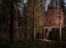 Η πεντάμορφη του δάσους μένει σε αυτό το ξενοδοχείο της Σουηδίας που μοιάζει βγαλμένο από όνειρο (ΦΩΤΟ) - Κυρίως Φωτογραφία - Gallery - Video