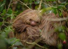 """Μην με ξυπνάς απ' τις 6... Αυτά τα ζωάκια απολαμβάνουν τον ύπνο τους & μας """"κλέβουν"""" την καρδιά (ΦΩΤΟ) - Κυρίως Φωτογραφία - Gallery - Video"""