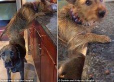 Αξιολάτρευτο βίντεο δείχνει 2 σκυλάκια να συνεργάζονται άψογα για να κλέψουν φαγητό από τον πάγκο της κουζίνας    - Κυρίως Φωτογραφία - Gallery - Video