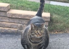 Μυώδης γάτα έχει γίνει Viral: Έχει μεγάλες πατούσες, σκληρό ύφος & πάνω από 14.700 ακολούθους (ΦΩΤΟ - ΒΙΝΤΕΟ)  - Κυρίως Φωτογραφία - Gallery - Video