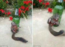Αγρότης έδεσε έναν σκίουρο σε μπουκάλι και τον βασάνισε επειδή «έκλεψε» λίγο καλαμπόκι (VIDEO) - Κυρίως Φωτογραφία - Gallery - Video