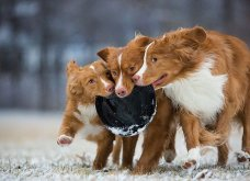 Μόλις δόθηκαν στην δημοσιότητα: Οι ωραιότερες φωτογραφίες με σκύλους για το 2018 - Κυρίως Φωτογραφία - Gallery - Video 11