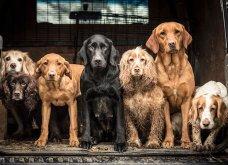 Μόλις δόθηκαν στην δημοσιότητα: Οι ωραιότερες φωτογραφίες με σκύλους για το 2018 - Κυρίως Φωτογραφία - Gallery - Video 12