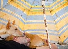 Μόλις δόθηκαν στην δημοσιότητα: Οι ωραιότερες φωτογραφίες με σκύλους για το 2018 - Κυρίως Φωτογραφία - Gallery - Video 14