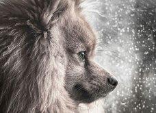 Μόλις δόθηκαν στην δημοσιότητα: Οι ωραιότερες φωτογραφίες με σκύλους για το 2018 - Κυρίως Φωτογραφία - Gallery - Video 17