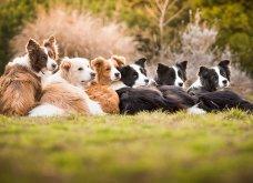 Μόλις δόθηκαν στην δημοσιότητα: Οι ωραιότερες φωτογραφίες με σκύλους για το 2018 - Κυρίως Φωτογραφία - Gallery - Video 23