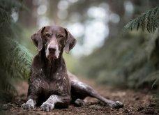 Μόλις δόθηκαν στην δημοσιότητα: Οι ωραιότερες φωτογραφίες με σκύλους για το 2018 - Κυρίως Φωτογραφία - Gallery - Video 4