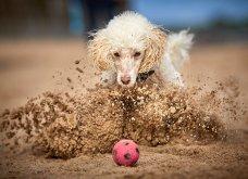 Μόλις δόθηκαν στην δημοσιότητα: Οι ωραιότερες φωτογραφίες με σκύλους για το 2018 - Κυρίως Φωτογραφία - Gallery - Video 27