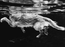 Μόλις δόθηκαν στην δημοσιότητα: Οι ωραιότερες φωτογραφίες με σκύλους για το 2018 - Κυρίως Φωτογραφία - Gallery - Video 28