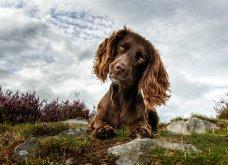 Μόλις δόθηκαν στην δημοσιότητα: Οι ωραιότερες φωτογραφίες με σκύλους για το 2018 - Κυρίως Φωτογραφία - Gallery - Video 31