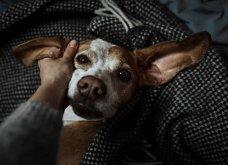 Μόλις δόθηκαν στην δημοσιότητα: Οι ωραιότερες φωτογραφίες με σκύλους για το 2018 - Κυρίως Φωτογραφία - Gallery - Video 33