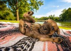 Μόλις δόθηκαν στην δημοσιότητα: Οι ωραιότερες φωτογραφίες με σκύλους για το 2018 - Κυρίως Φωτογραφία - Gallery - Video 6