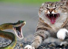 Πάρος: Η συγκλονιστική μάχη τεράστιου φιδιού με γάτα στον βράχο έληξε… ισοπαλία (Βίντεο)  - Κυρίως Φωτογραφία - Gallery - Video