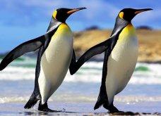 Σαν ερωτευμένοι πιγκουίνοι κυριολεκτικά - Δείτε τους πιασμένους «χέρι-χέρι» (Φώτο & Βίντεο) - Κυρίως Φωτογραφία - Gallery - Video
