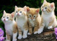 Οι γάτες είναι μαγικά πλάσματα – έχουν ενσυναίσθηση και μπορούν να θεραπεύσουν το μυαλό, το σώμα και την ψυχή  - Κυρίως Φωτογραφία - Gallery - Video