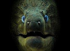 Underwater Photo 2018: Οι καλύτερες υποβρύχιες φωτογραφίες που βραβεύτηκαν από το Scuba Diving Magazine   - Κυρίως Φωτογραφία - Gallery - Video 2