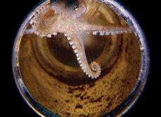 Underwater Photo 2018: Οι καλύτερες υποβρύχιες φωτογραφίες που βραβεύτηκαν από το Scuba Diving Magazine   - Κυρίως Φωτογραφία - Gallery - Video 3
