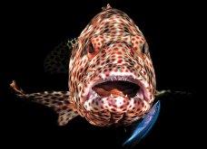 Underwater Photo 2018: Οι καλύτερες υποβρύχιες φωτογραφίες που βραβεύτηκαν από το Scuba Diving Magazine   - Κυρίως Φωτογραφία - Gallery - Video 4
