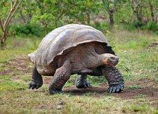Απίστευτο: Εκλάπησαν 123 μωρά γιγαντιαίων χελωνών από τα Νησιά Γκαλαπάγκος - Κυρίως Φωτογραφία - Gallery - Video
