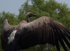 Αυτό το πουλί 700 κιλών ήταν το μεγαλύτερο που έζησε ποτέ στον πλανήτη (Φωτό) - Κυρίως Φωτογραφία - Gallery - Video
